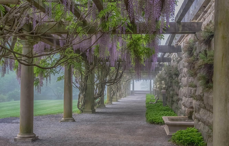 Photo wallpaper flowers, fog, plant, gallery, column, Wisteria