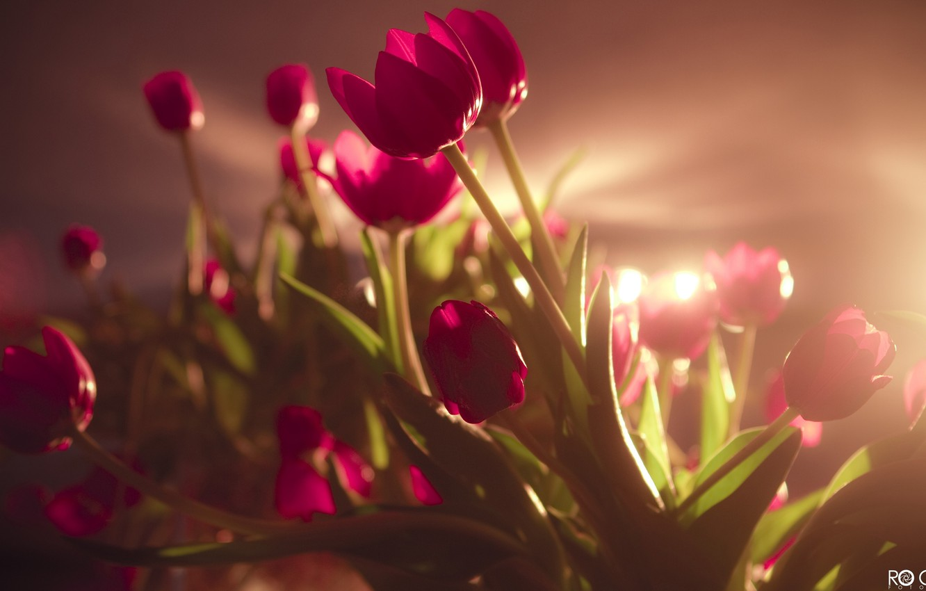 Photo wallpaper field, ass, joy, happiness, flowers, smile, girls, holiday, bouquet, pink, beautiful, tulips, bright, March 8, ...