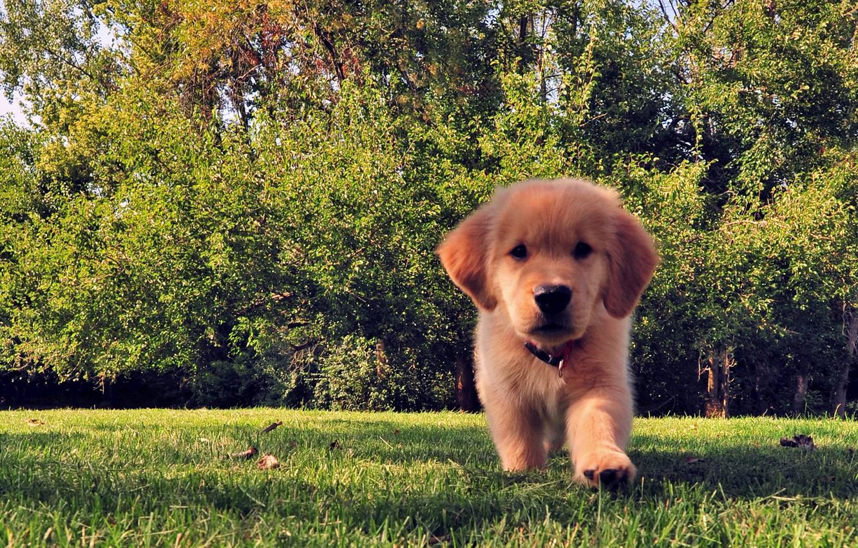 Photo wallpaper summer, grass, trees, dog, puppy, funny