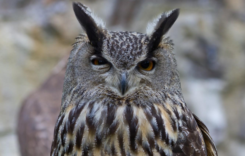 Photo wallpaper owl, bird, head, owl, tail, squint
