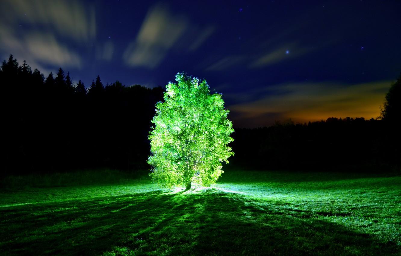 Photo wallpaper light, night, Tree, glowing tree