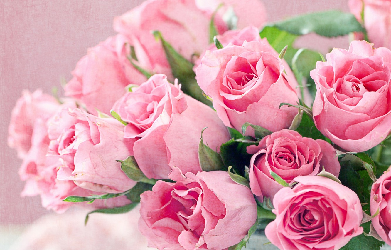 Photo wallpaper roses, bouquet, pink, closeup