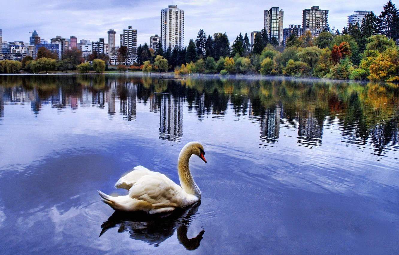 Photo wallpaper the city, pond, Swan