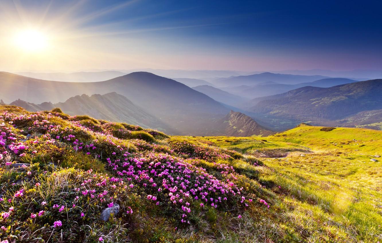 Photo wallpaper grass, the sun, rays, flowers, mountains, nature, stones, hills, Azalea