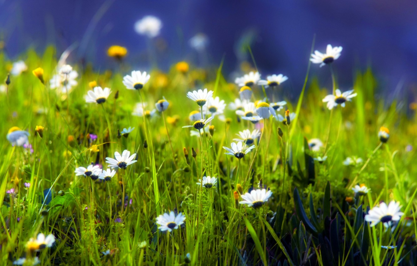 Photo wallpaper greens, grass, green, glade, plants, Daisy