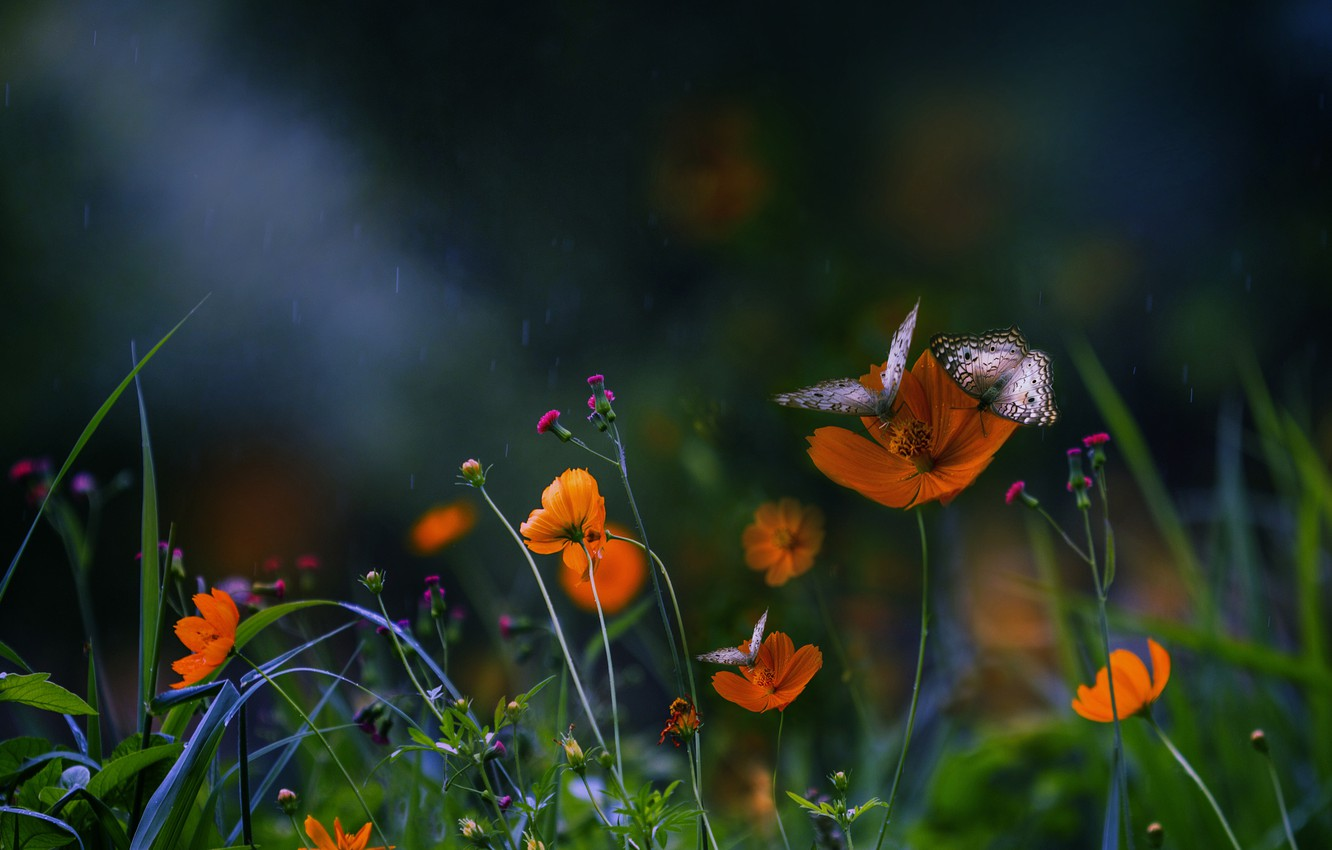 Photo wallpaper summer, macro, butterfly, flowers, insects