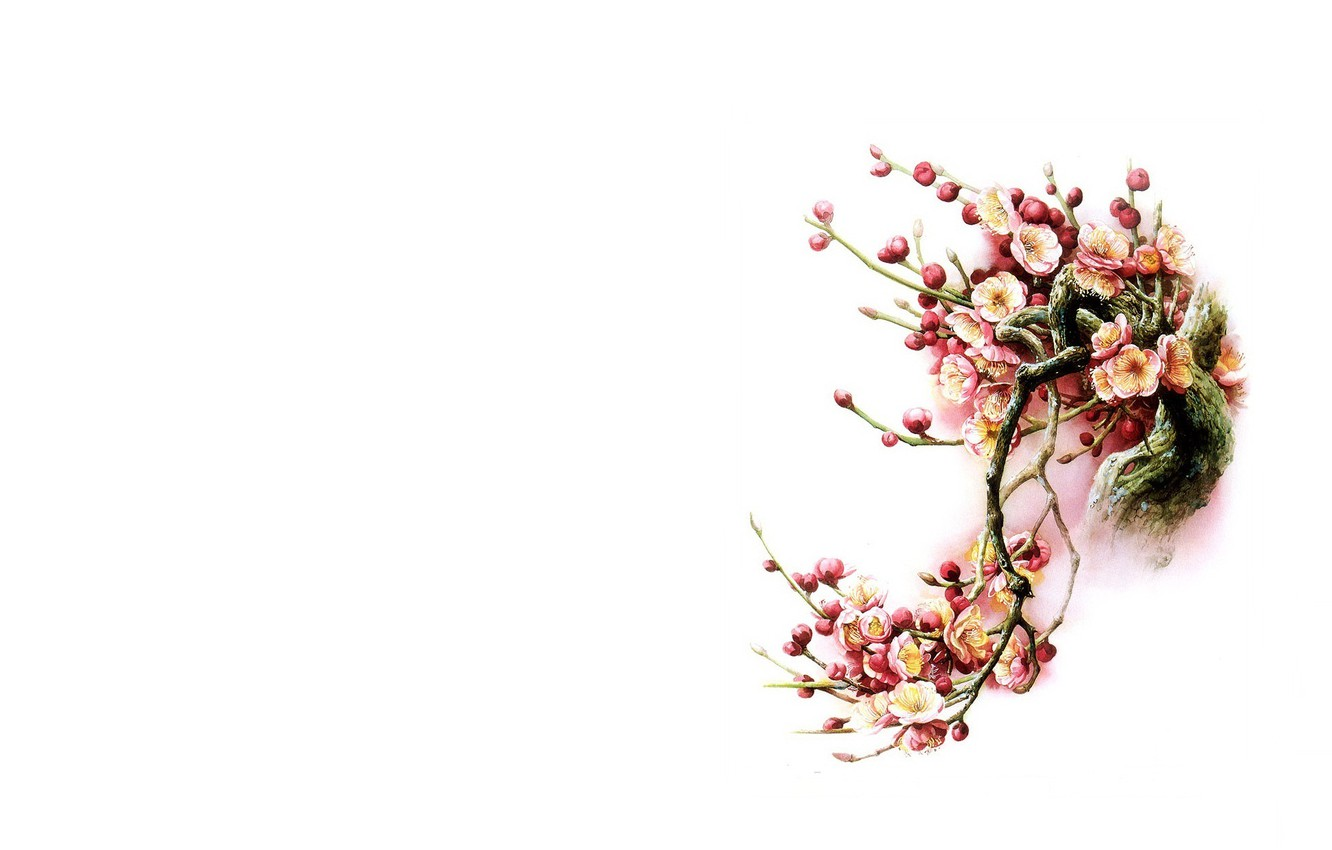 Wallpaper Flowers Bird Minimalism Spring East Sakura Art