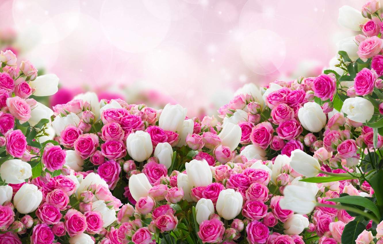 Photo wallpaper photo, Flowers, Roses, A lot