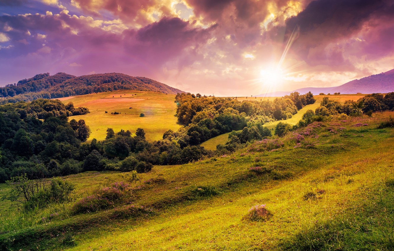 Photo wallpaper the sun, trees, flowers, nature, hills, clearing, trees, nature, flowers, sun, hills, meadow, lawn
