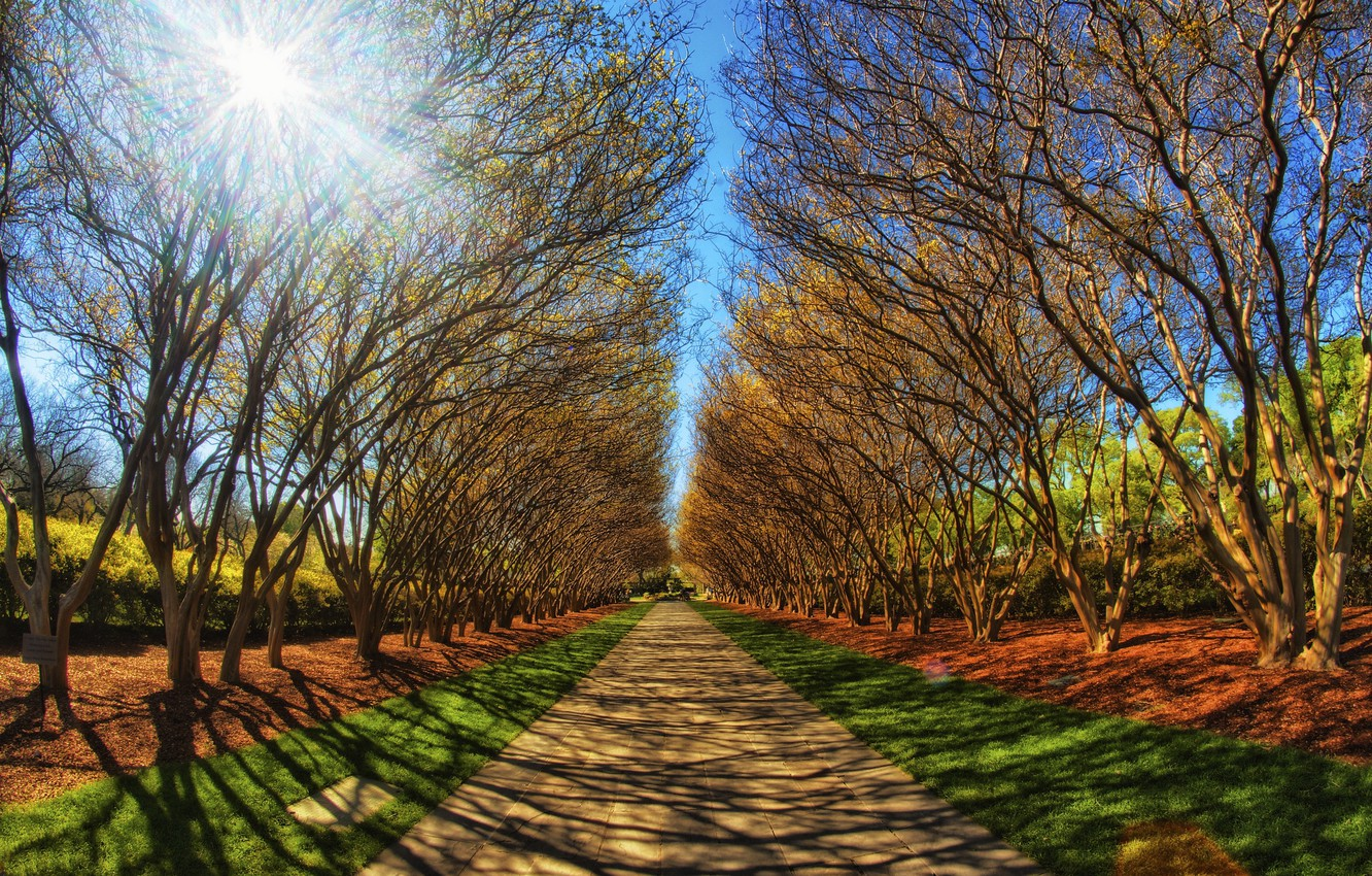 Photo wallpaper ROAD, FOREST, The SKY, The SUN, GREENS, TRAIL, LIGHT, TREES, RAYS, SUMMER, DAL, PARK, ALLEY