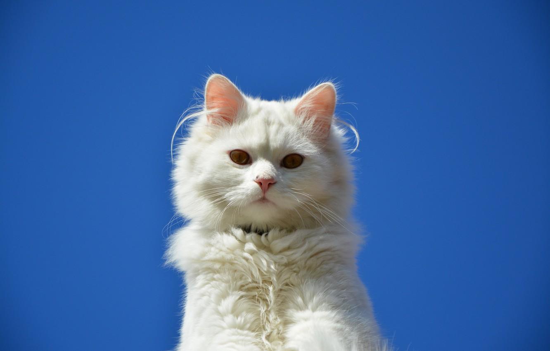 Photo wallpaper cat, eyes, cat, Koshak