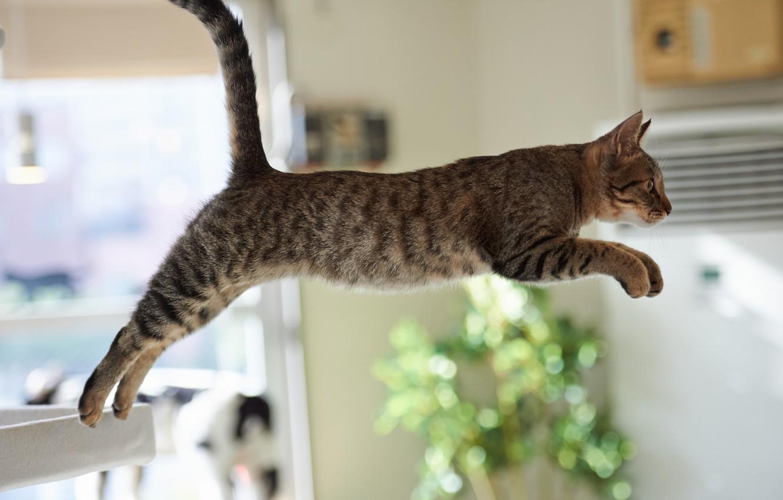 Photo wallpaper cat, cat, room, jump