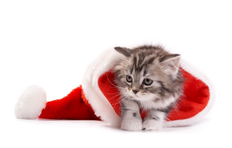 Photo wallpaper cat, Christmas, New year, christmas, new year, cat, santa hat, Santa hat