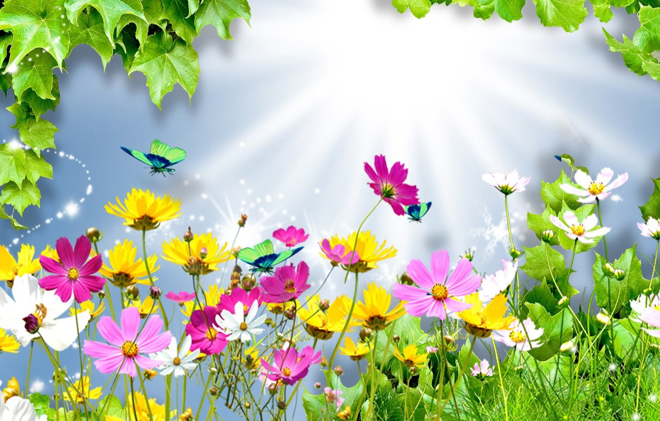 Photo wallpaper summer, leaves, rays, light, flowers, collage, butterfly, kosmeya