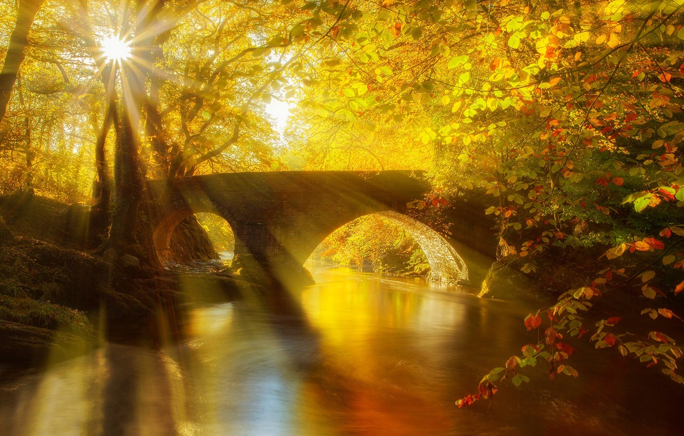 Photo wallpaper autumn, forest, leaves, water, trees, bridge, nature, Park, river, view, hdr, walk, forest, alley, river, …
