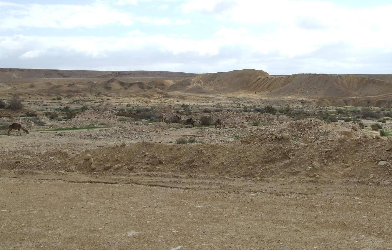 Photo wallpaper ISRAEL, THE NEGEV DESERT, CAMELS