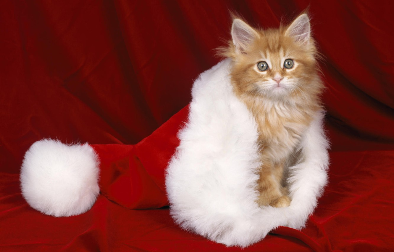 Photo wallpaper red, kitty, hat, new year
