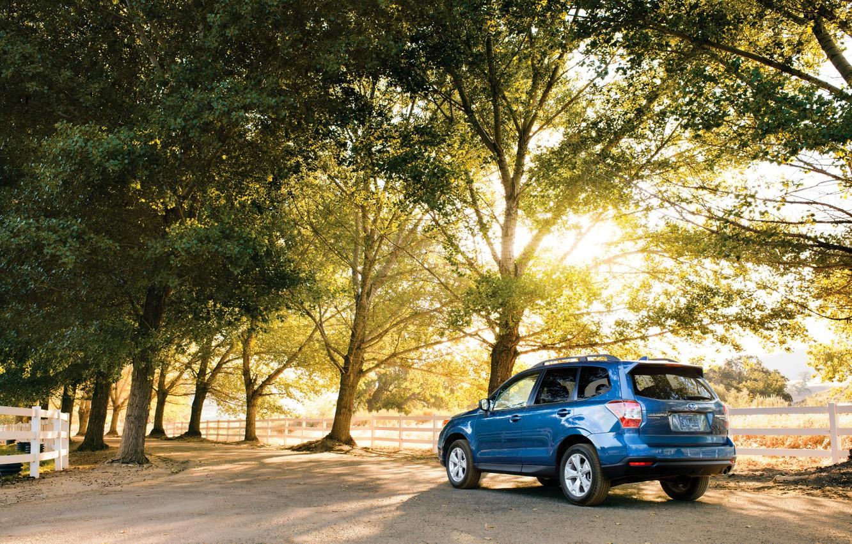 Photo wallpaper trees, Park, blue, Subaru, Forester