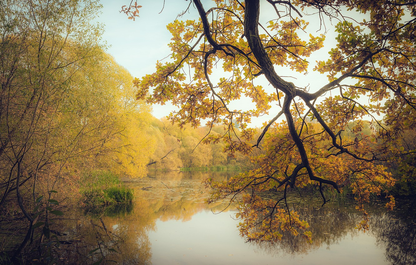 Photo wallpaper autumn, forest, leaves, trees, branches, lake, yellow