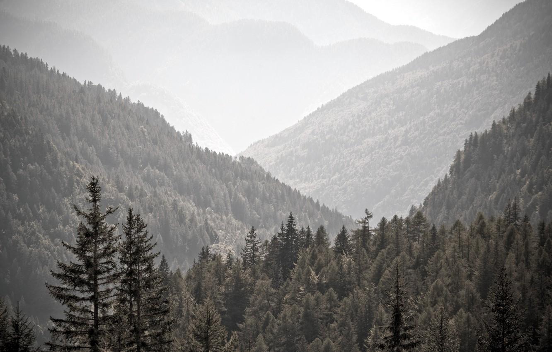 Photo wallpaper trees, landscape, mountains