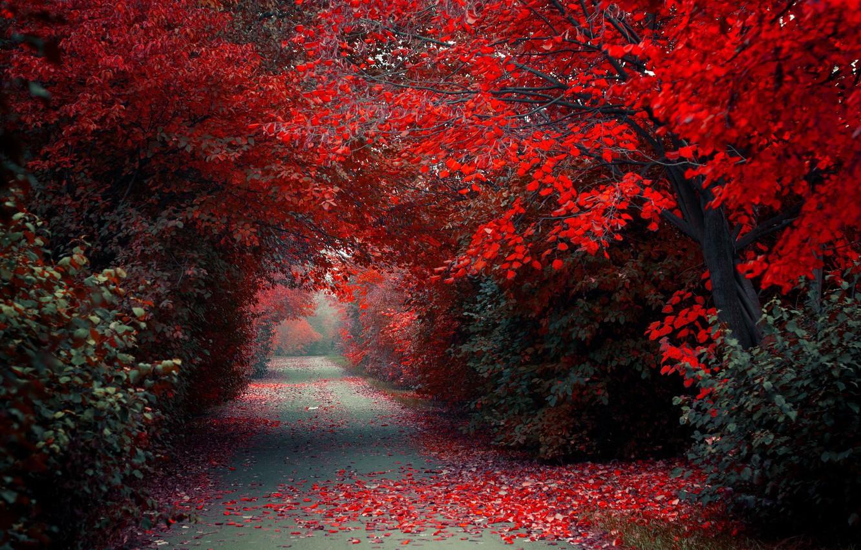 Photo wallpaper autumn, nature, Park