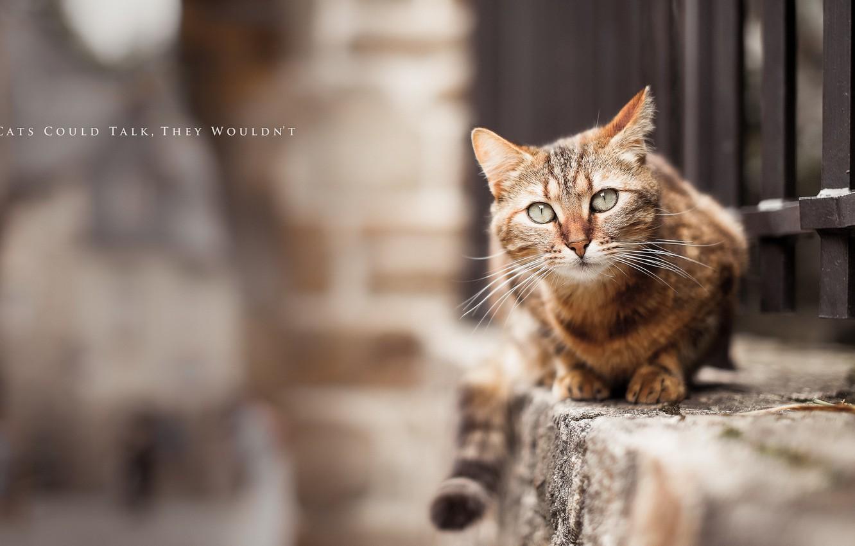 Photo wallpaper cat, background, street