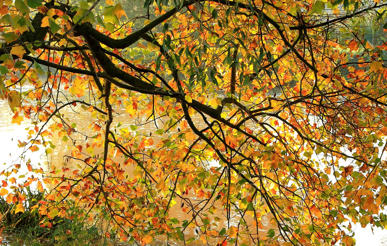Photo wallpaper autumn, leaves, branches, river, tree