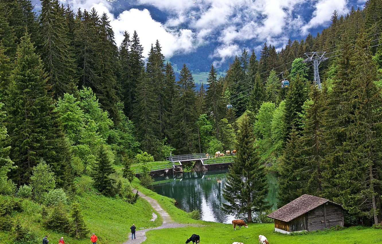 Photo wallpaper greens, forest, grass, clouds, trees, mountains, height, Switzerland, valley, cows, slope, path, pond, lift, Grindelwald, …