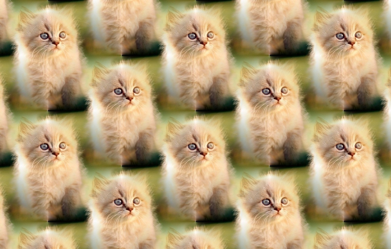 Photo wallpaper background, kitty, pussy, texture units