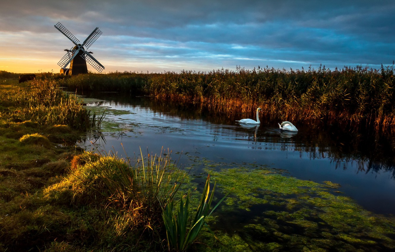 Photo wallpaper Landscape, Reflections, swans, Herringfleet Dawn, Wind pump, Windmill