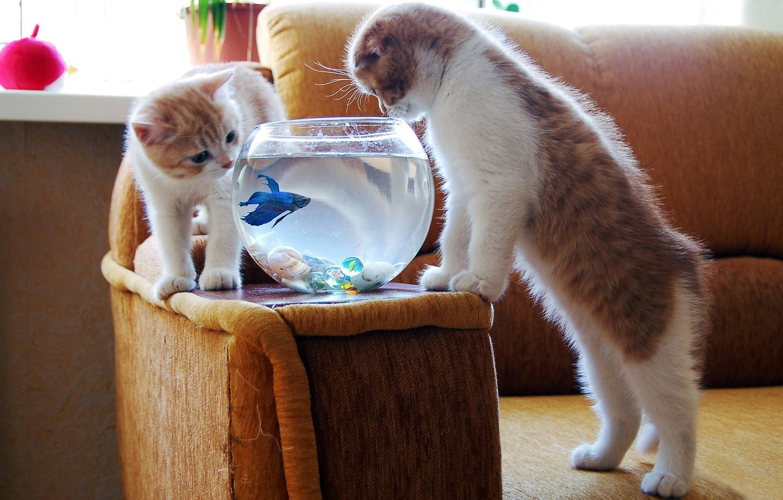 Photo wallpaper aquarium, fish, kittens