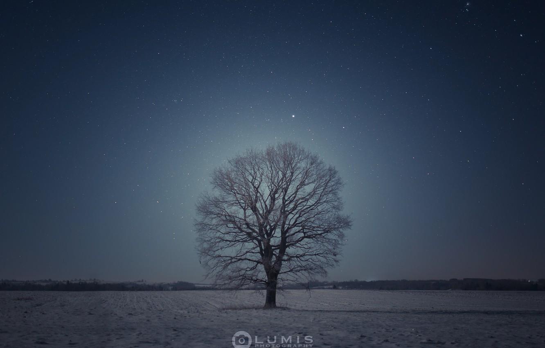 Photo wallpaper winter, tree, the evening, Snow