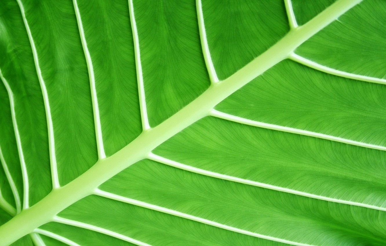 Photo wallpaper Macro, Sheet, Greens