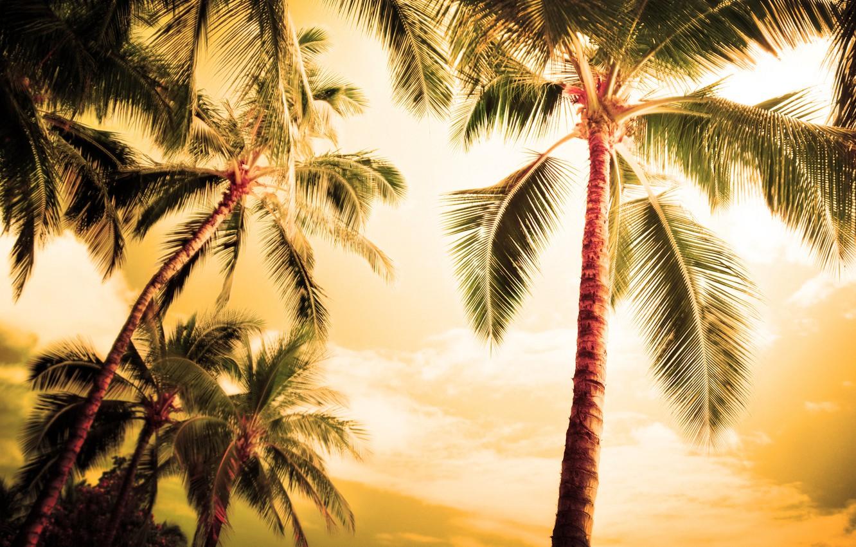Photo wallpaper sea, summer, the sky, leaves, Islands, trees, nature, Palma, palm trees, tree, the ocean, romance, …