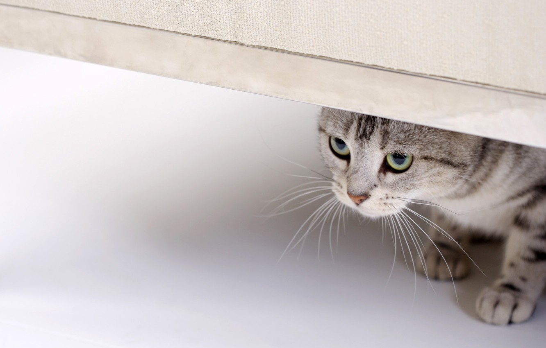 Photo wallpaper cat, eyes, cat, look, looks