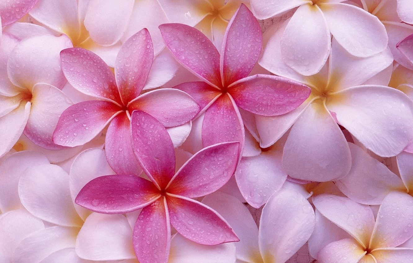 Photo wallpaper flowers, background, pink