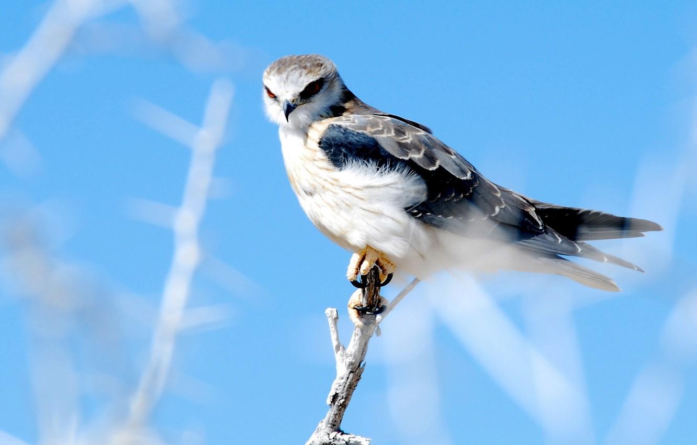 Photo wallpaper nature, bird, Falcon
