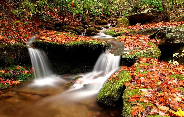 Photo wallpaper autumn, leaves, water, stream, Stones