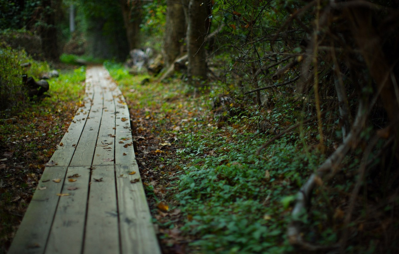 Photo wallpaper road, forest, summer, nature, beauty, plants, path