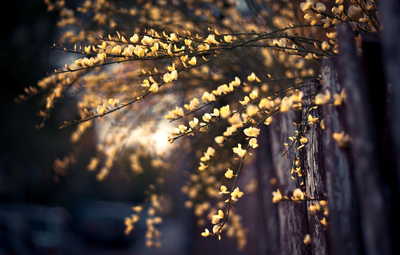 Photo wallpaper macro, flowers, photo, background, branch, Wallpaper, the fence, plant