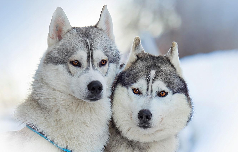 Photo wallpaper dogs, beauty, friends