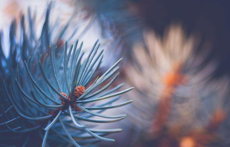Photo wallpaper macro, tree, branch, needles
