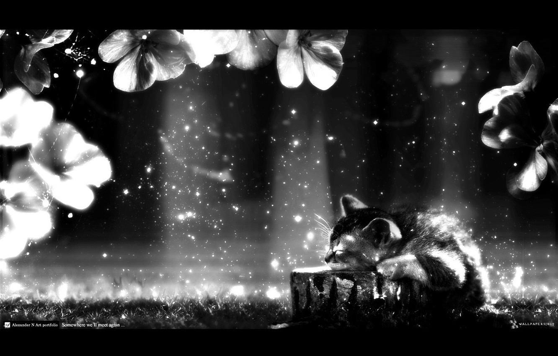 Photo wallpaper rays, dreams, flowers, darkness, kitty, dreams