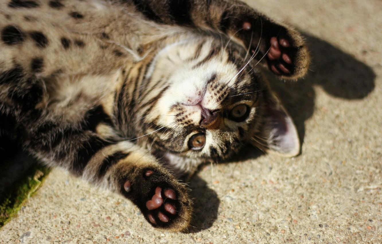 Photo wallpaper cat, mustache, paws