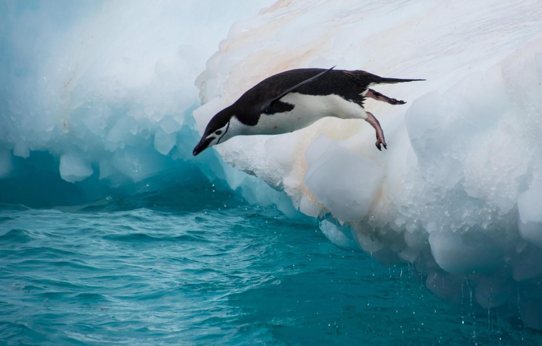 Photo wallpaper water, jump, bird, penguin, floe, Antarctic penguin