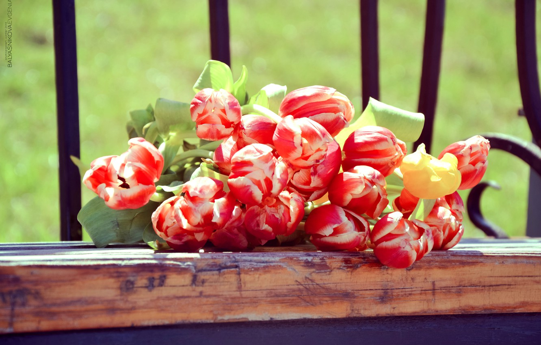 Photo wallpaper summer, macro, landscape, flowers, nature, photo, cute, beautiful, tulips, summer, flowers, cottage