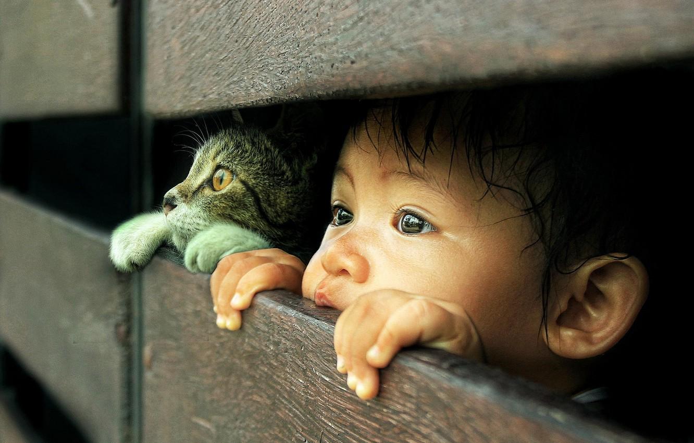 Photo wallpaper cat, look, child