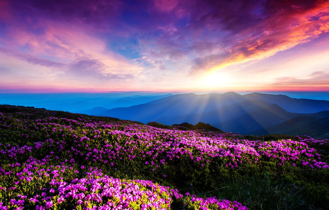 Photo wallpaper the sky, clouds, rays, sunset, flowers, mountains