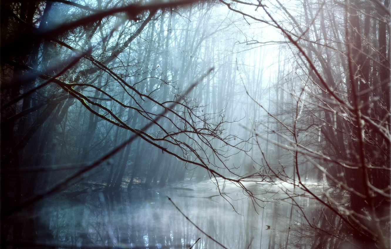 Photo wallpaper rays, trees, landscape, river