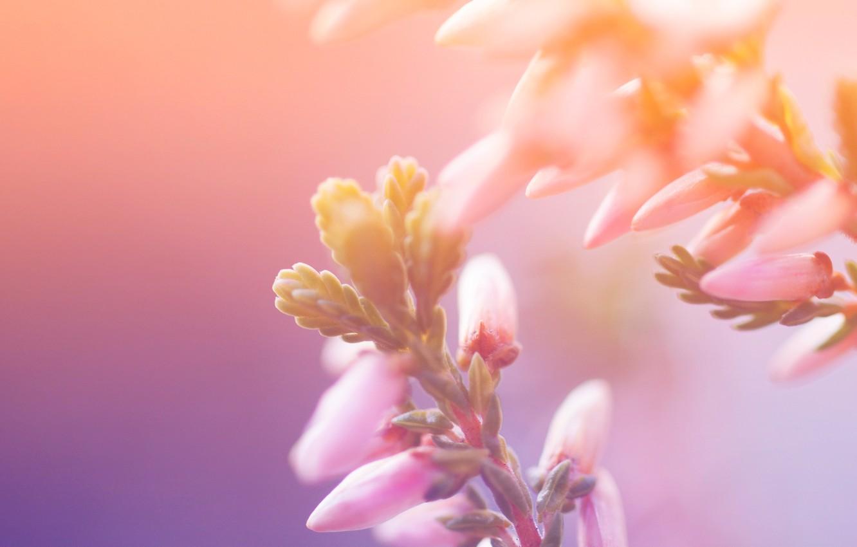 Photo wallpaper macro, light, flowers, nature, paint, colors, petals, light, nature, flowers, macro, 2560x1600, petals